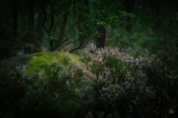 20170910-bleau-autumn-gros-sablon-laurence-bichon-05-1000x1000-web