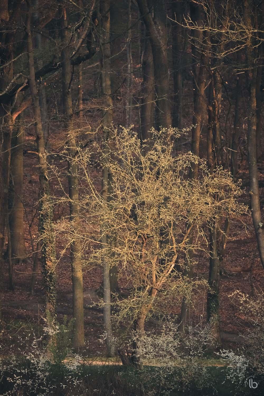 Forêt de Meudon - printemps - by laurence bichon