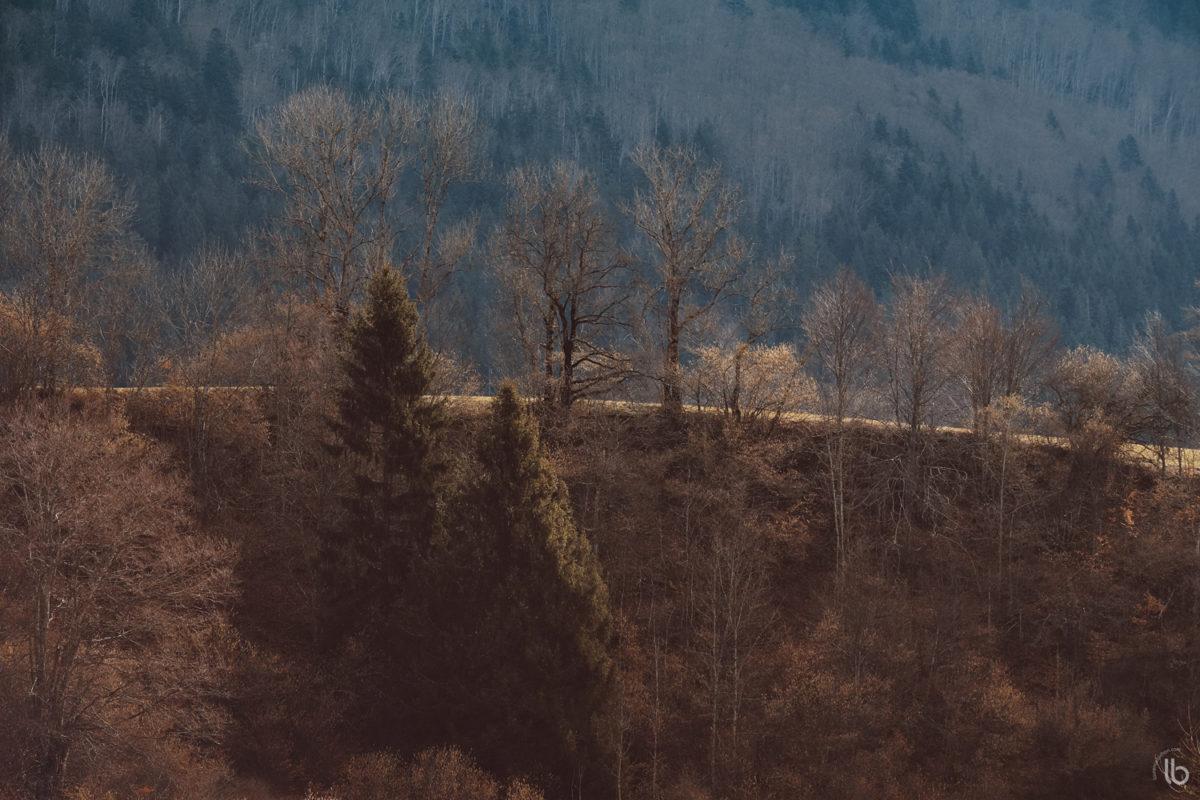 Rando photo à Saint-Julien-en-Vercors en hiver - Laurence Bichon Photographe