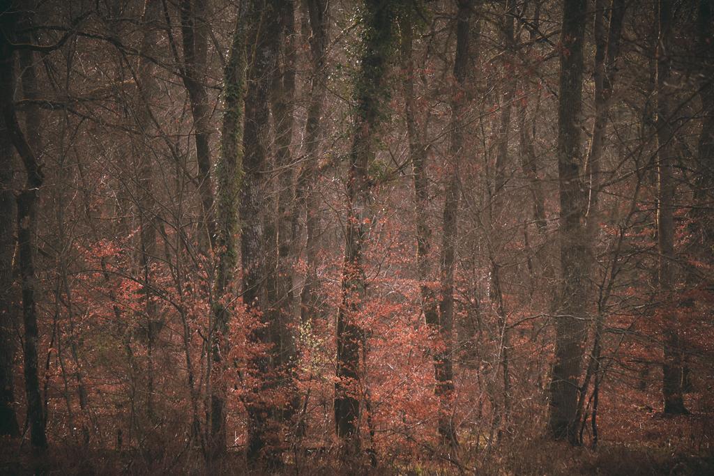 Forêt de Bourron-Marlotte en avril - Fontainebleau